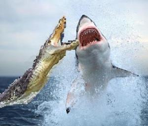 Shark-vs-crocodile